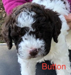 Button 7 Weeks B copy.jpg